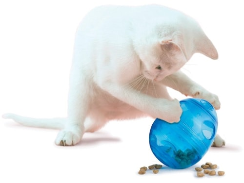 Conteneur à croquettes pour chiens et chats