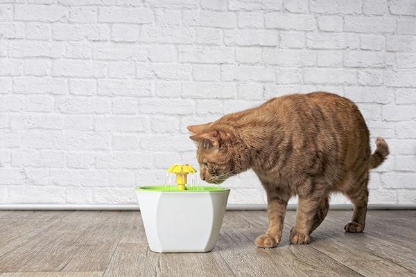 Animalerie - Fontaine à eau pour chat