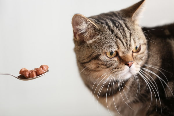 chat refusant de manger