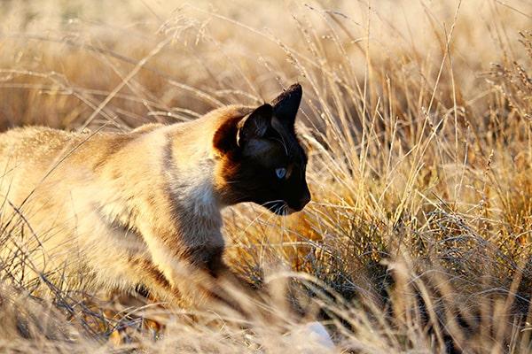 Croquettes chats domestiques
