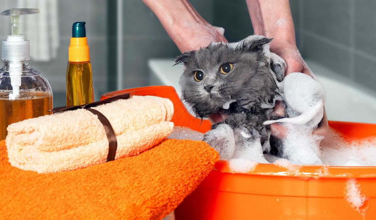 Laver son chat