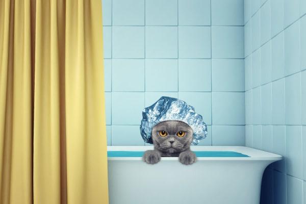Laver un chat