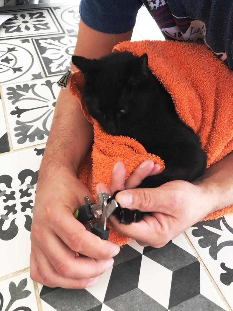 Manucure et pédicure - Raccourcir les griffes du chat