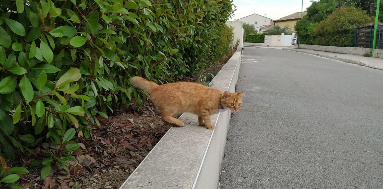 Weenect - Collier pour chat équipé d'un GPS