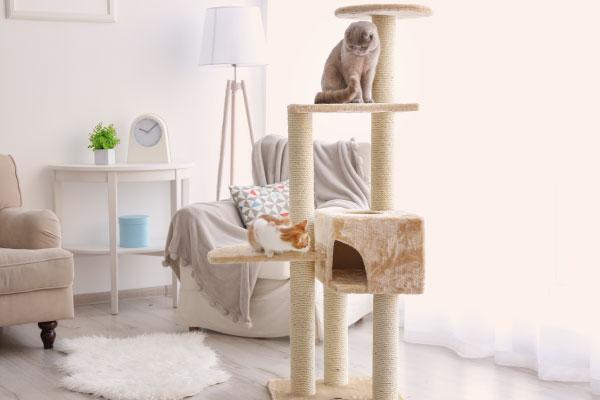 Chat d'appartement dans un arbre à chats