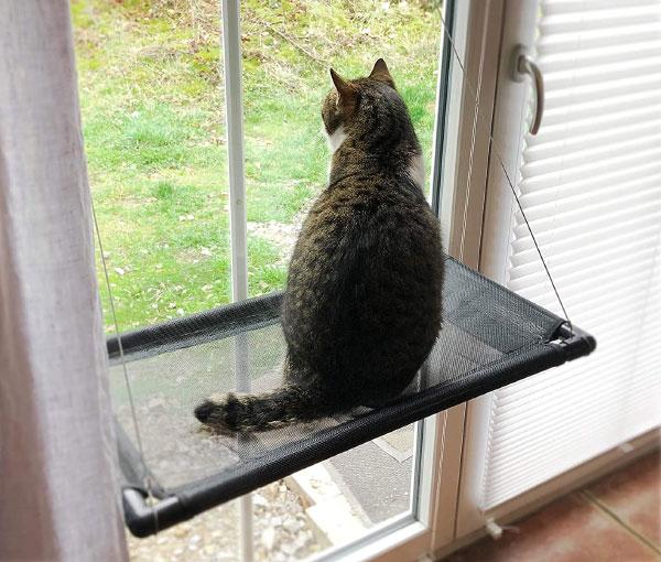 Hamac pour chat en appartement