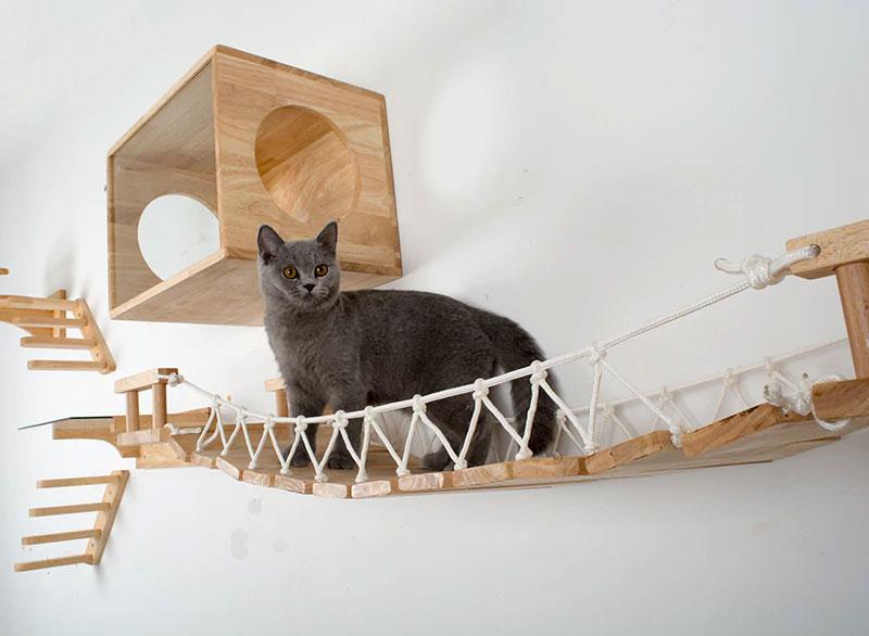 Plateformes pour stimulations chats domestiques