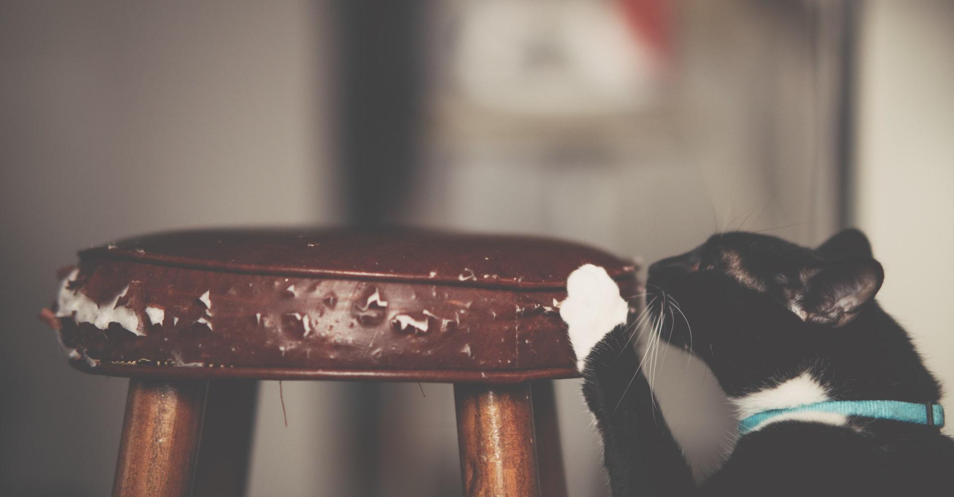 Chat qui fait ses griffes partout