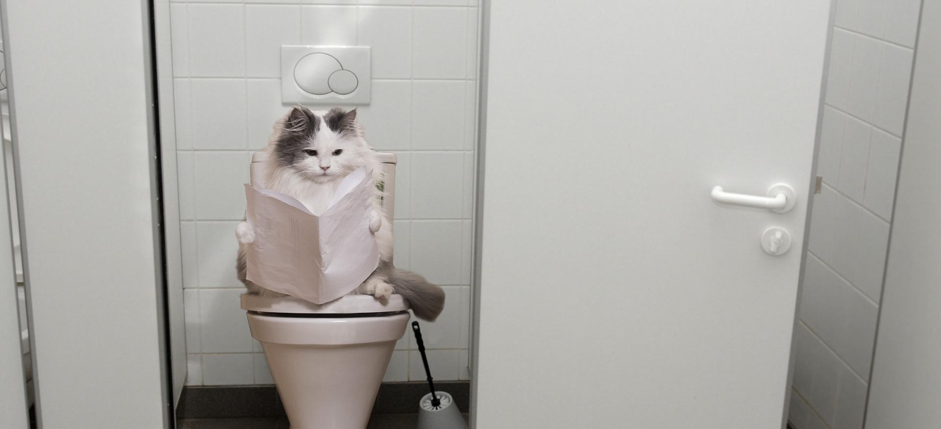 Diarrhée chat