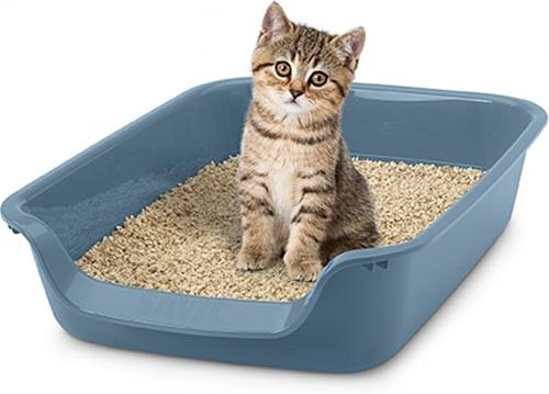 Comment apprendre à un chaton à aller à la litière