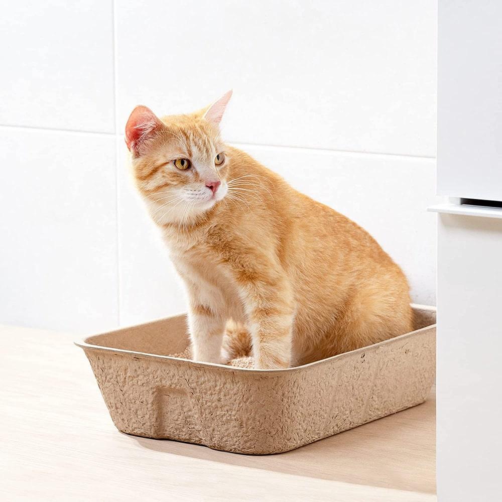 Bac à litière en carton jetable