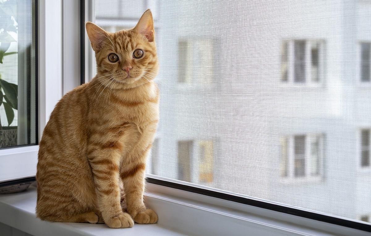 Fenêtre sécurisée pour les animaux de compagnie