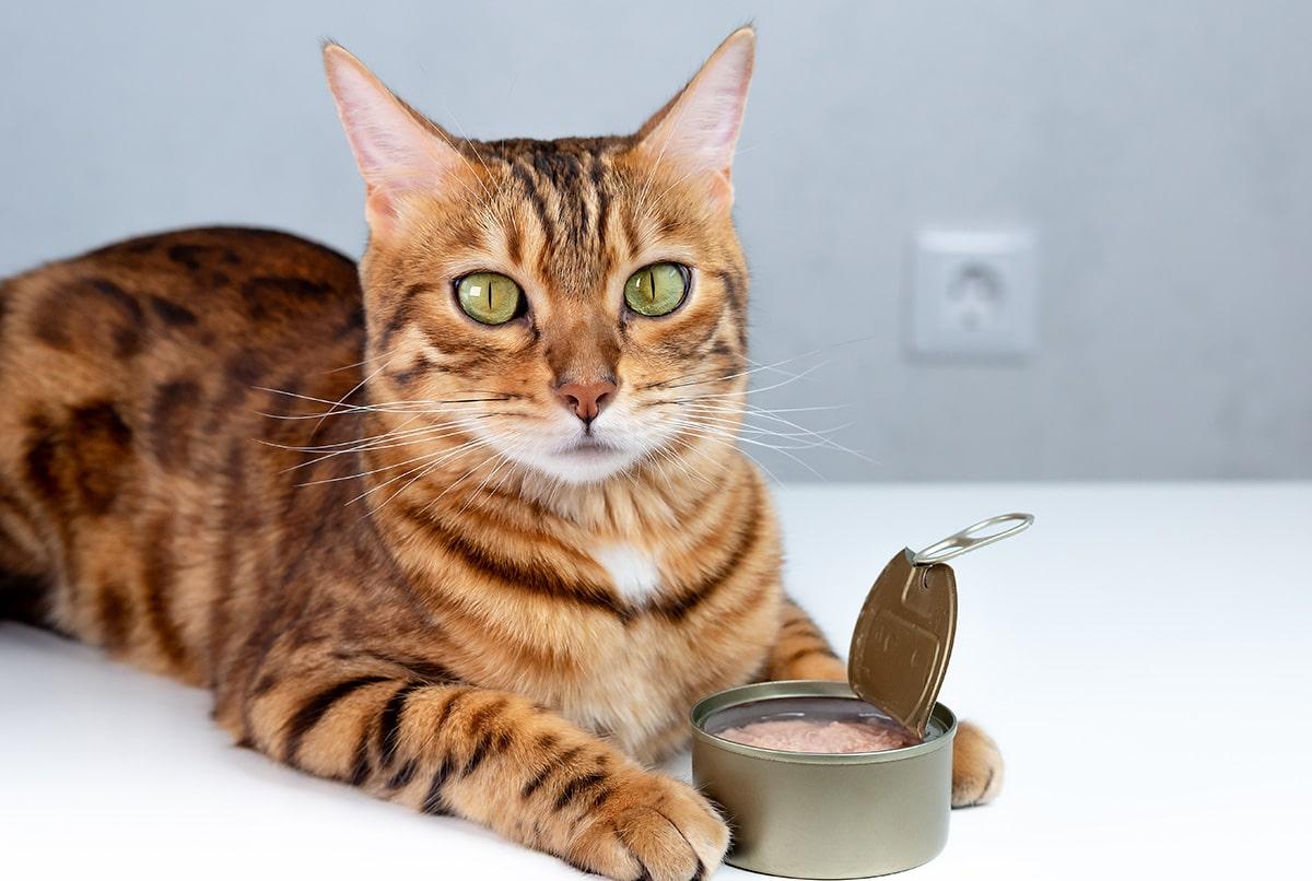Le thon en boite est il bon pour les chats