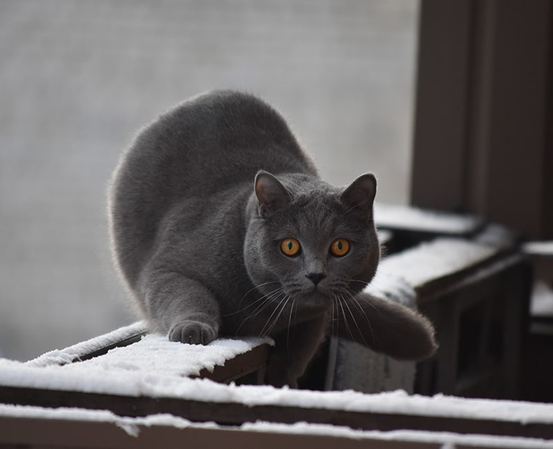 Santé du chat - Risque de chute