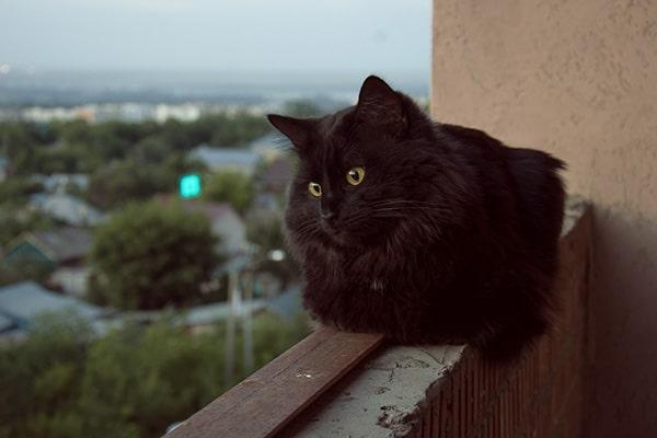Syndrome du chat parachutiste